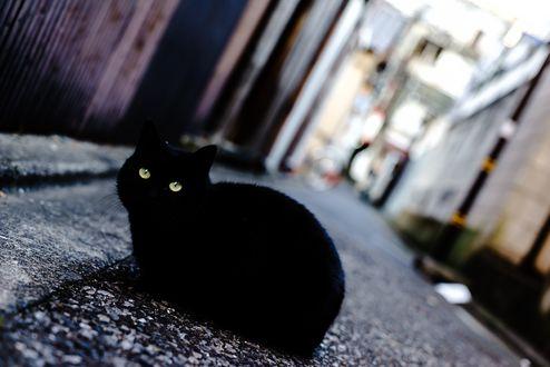 Обои Черная кошка на улице города
