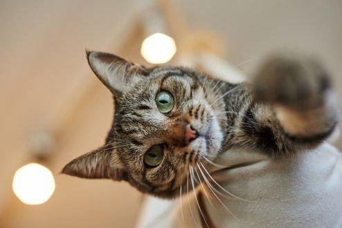 Обои Кос зелеными глазами, by NEKOFighter