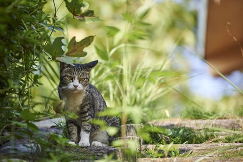 Обои Кошка на природе, by NEKOFighter