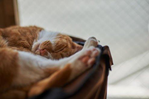 Обои Спящая рыжая кошка, by NEKOFighter