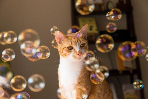 Обои Кот смотрит на мыльные пузыри, by NEKOFighter