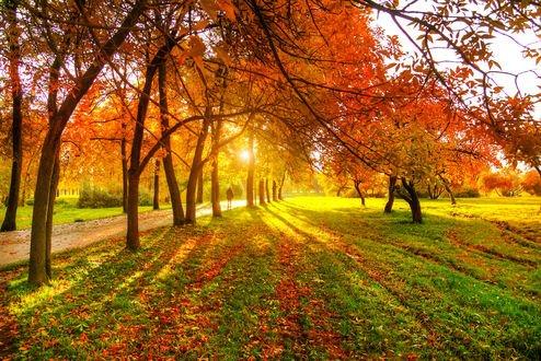 Обои Осенняя аллея в парке, Санкт-Петербург, фотограф Ed Gordeev