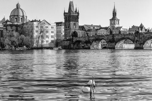 Обои Прага, Чехия, Карлов мост, река и лебеди