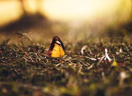Обои Желтая бабочка на траве