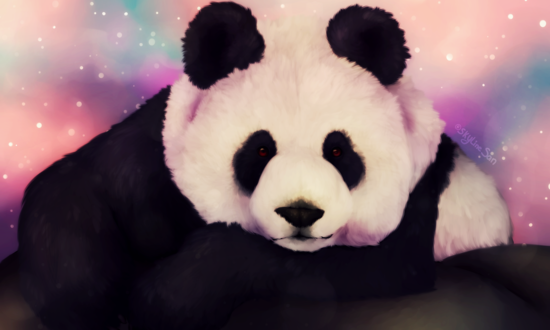 Обои Панда на цветном фоне, by SkylineSan