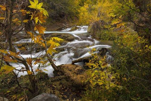 Обои Река в осеннем лесу, Arizonan / Аризона, фотограф Danilo Faria