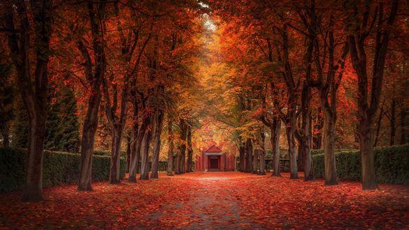 Обои Дорога к дому, усыпанная осенними листьями