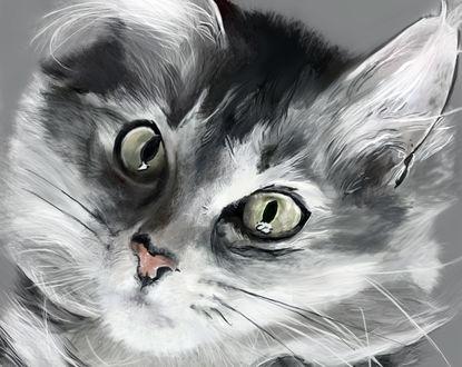 Обои Кошечка с зелеными глазами, by GryFalck