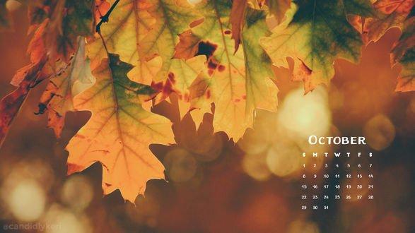 Обои Осенние листья на фоне боке (календарь октября 2017)