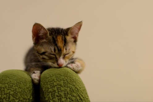 Обои Котенок спит на спинке кресла, фотограф NEKOFighter
