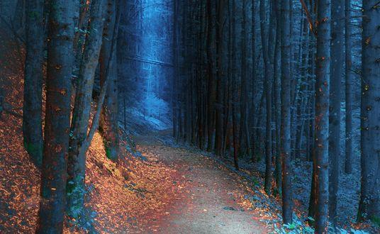 Обои Дорожка в осеннем лесу, Zlaca, Banovici, Босния, фотограф Mevludin Sejmenovic