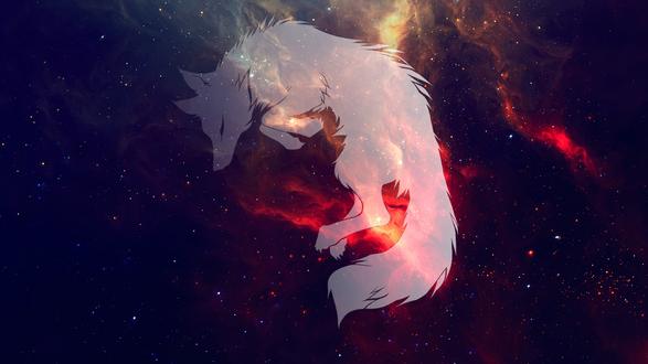 Обои Белый волк в космосе