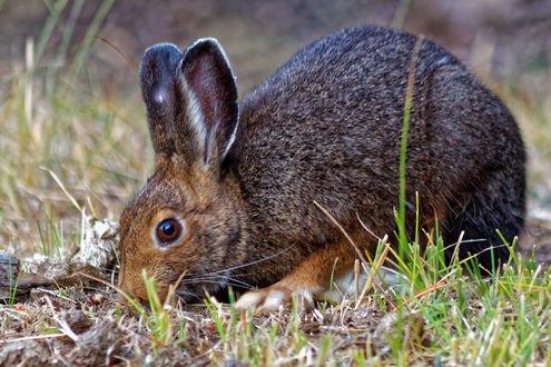 Обои Кролик в траве, фотограф Phil Hills