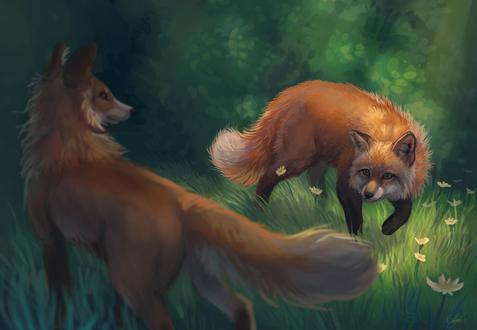 Обои Собака и лиса на фоне травы и ромашек, by Night-Owl-23