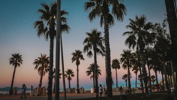 Обои Пальмы на пляже в Barcelona / Барселоне