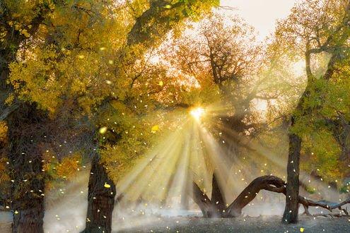Обои Осенняя симфония в солнечном свете, фотограф FaceChoo Yong