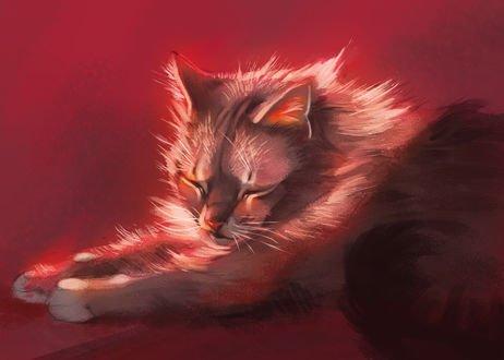 Обои Спящий кот, by Pixxus