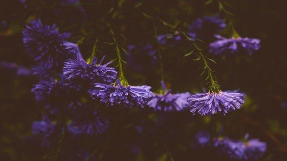 Обои Сиреневые цветы на размытом фоне