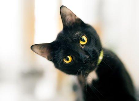 Обои Черный котик на размытом фоне