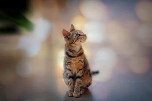 Обои Полосатый котенок на фоне боке