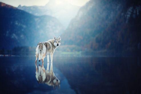 Обои Собака и ее отражение в воде, фотограф Anne Geier