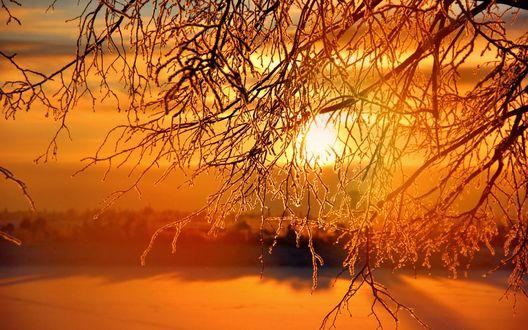 Обои Солнце освещает заснеженную поляну и дерево