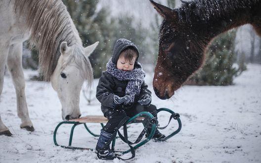 Обои Мальчик сидит на санях возле лошадей