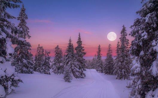 Обои Заснеженные деревья на фоне вечернего неба