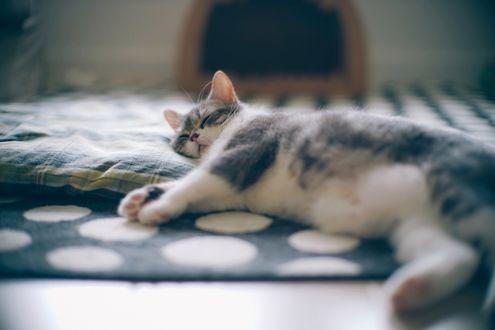 Обои Котенок сладко спит на постели