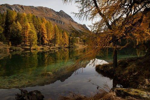 Обои Золотая осень на горном озере вдоль перевала Albula Pass Road in the Grisons, Switzerland / Альбула в Граубюнде, Швейцария, фотограф Jacky Kobelt