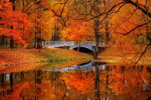 Обои Осень в Царском селе, фотограф Ed Gordeev