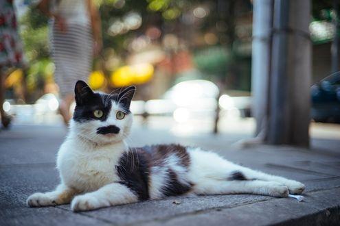 Обои Кошка лежит на дороге