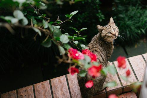 Обои Полосатая кошка на улице