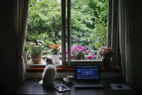 Обои Кошка сидит на столе с ноутбуком, чашкой с чаем и другими предметами у окна, за которым цветут цветы