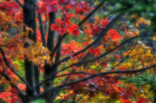 Обои Осеннее дерево с разноцветной листвой, фотограф Dean Bouchard