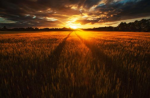 Обои Закат солнца в поле