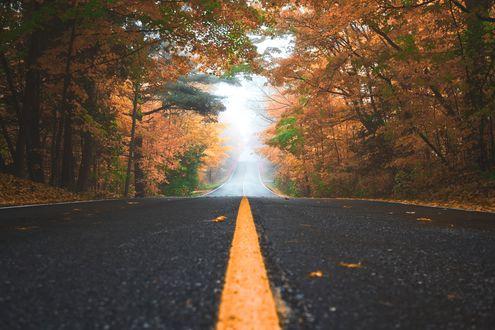 Обои Дорога в осеннем лесу, ведущая в туман