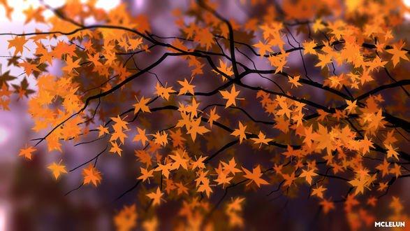 Обои Осенние листья на ветках дерева