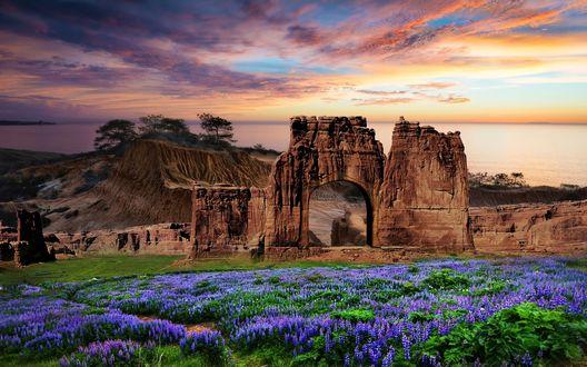 Обои Развалины крепости возле люпинового поля