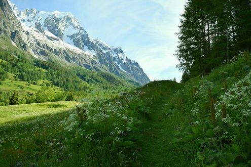 Обои Луга, леса и горы в долине Валь Ферре, Италия / Val Ferret, Italy