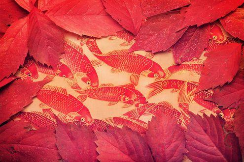 Обои Красные опавшие листья лежат на холсте с красно-золотыми карпами кои