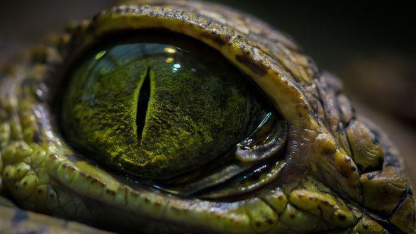Обои Глаз крокодила крупным планом