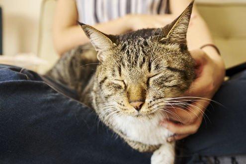 Обои Кошка с закрытыми глазами в руке хозяйки