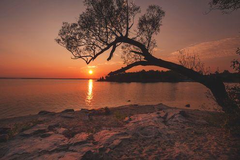 Обои Дерево склонилось над рекой на фоне заходящего солнца