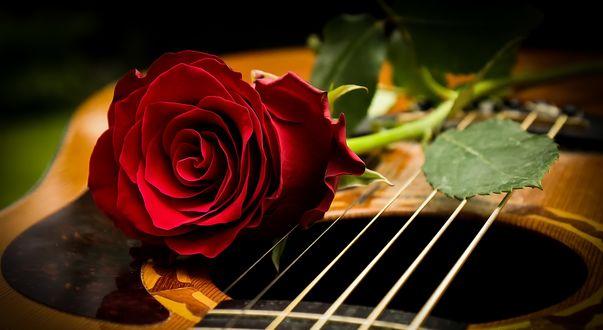 Обои Роза лежит на корпусе гитары