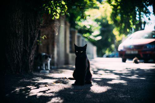 Обои Черный кот на улице города