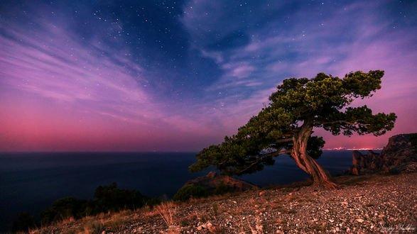 Обои Дерево на фоне облачного неба, фотограф Sergey Shatskov