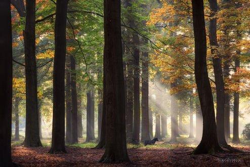 Обои Осенний утренний лес с лошадью, фотограф Inge Bovens