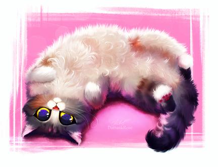 Обои Пушистый кот на розово-белом фоне, by DamaskRose0503