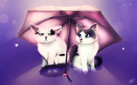 Обои Кот и кошка под розовым зонтом с сердечком, by DamaskRose0503